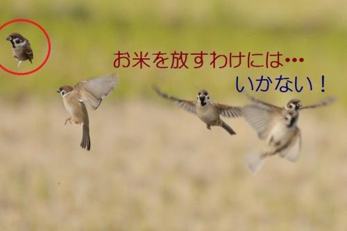 050_201601021843576b2.jpg