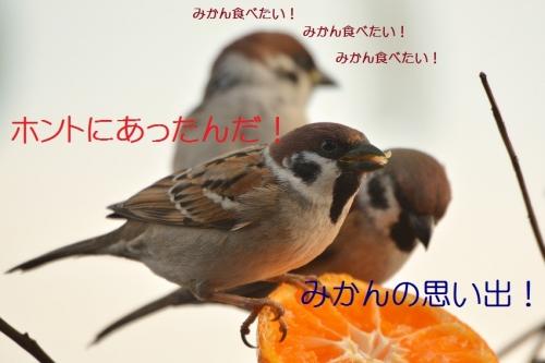 050_20160117213250ada.jpg