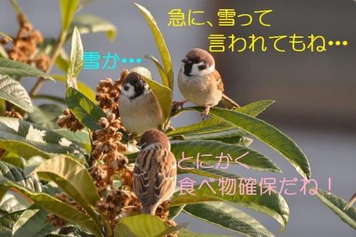 050_20160122184107321.jpg