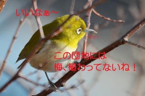 050_20160217184549670.jpg