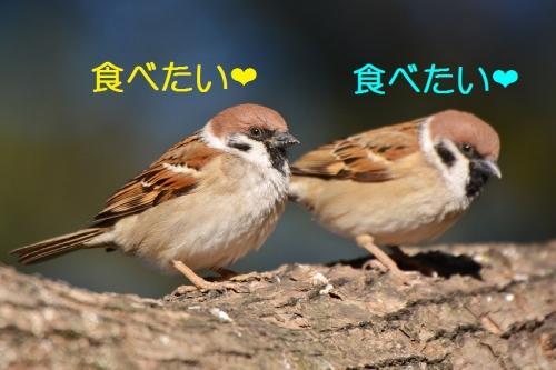 050_20160219203834d5b.jpg