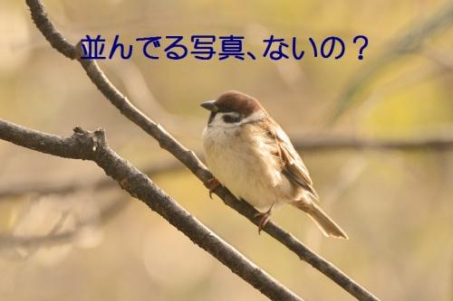 050_201603031911077ee.jpg