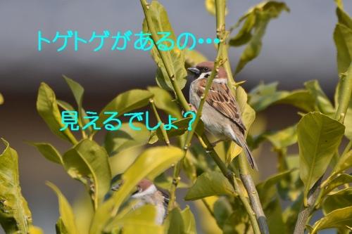 050_2016030621493738d.jpg