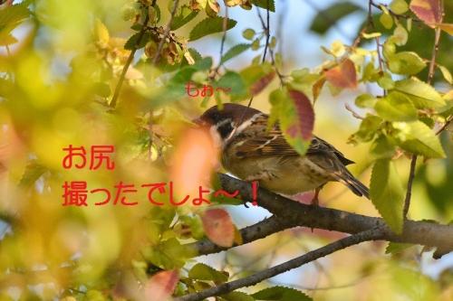 060_201510302058009db.jpg