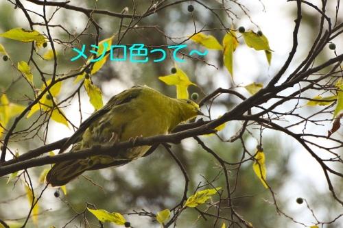 060_20151104205224804.jpg
