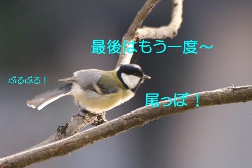 060_20151127225922462.jpg