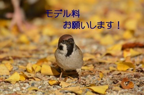 060_20151130213203cd1.jpg
