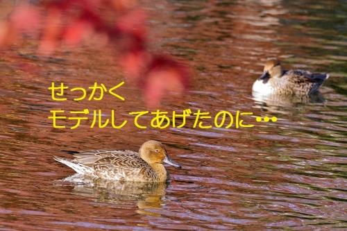 060_20151203223113c3e.jpg