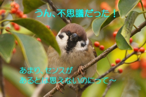 060_2015121822191143c.jpg