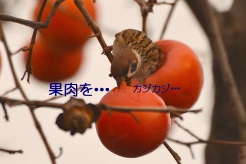 060_201512272136191a2.jpg