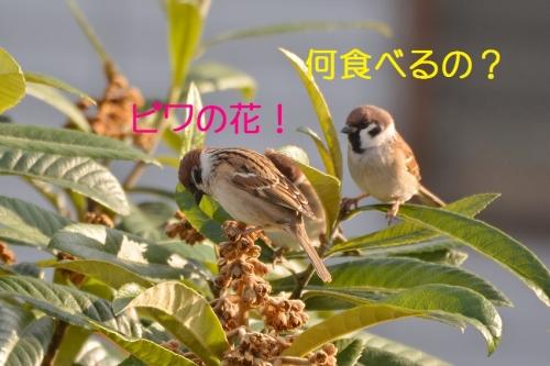 060_20160122184136201.jpg