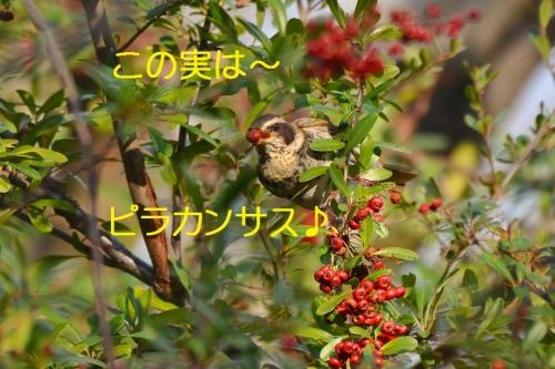 060_20160124224235bbf.jpg