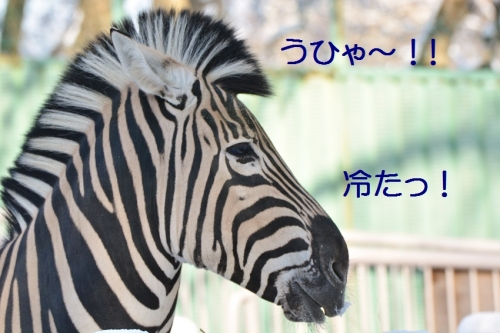 060_201601252128318ca.jpg