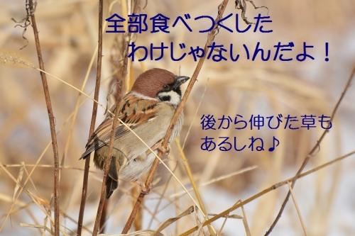 060_20160131210235d7d.jpg