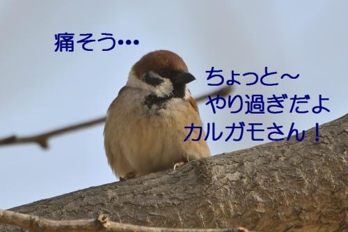 060_20160223214005ca5.jpg