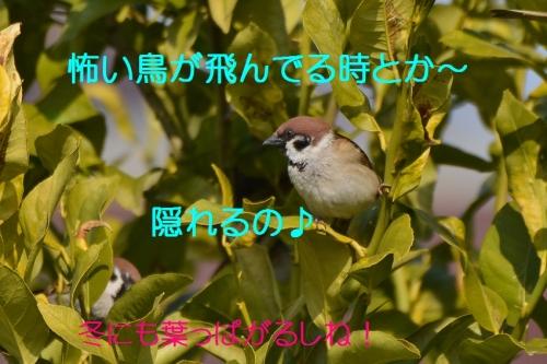 060_2016030621504400b.jpg