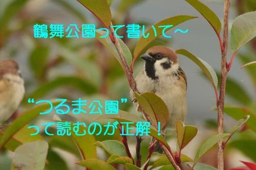 070_2016010719054724e.jpg