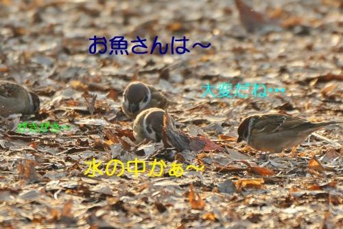 070_20160109195812f6a.jpg