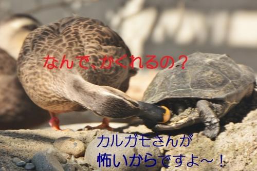 070_2016022321400797f.jpg