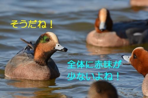 070_2016030319205706f.jpg