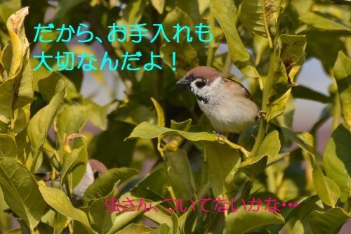 070_20160306215045fac.jpg