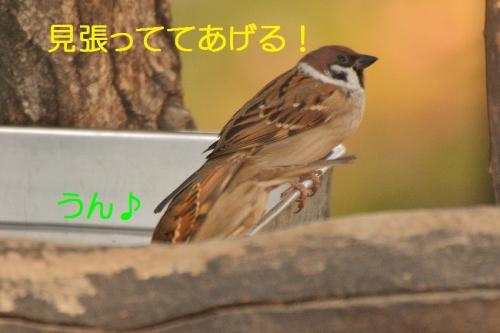 080_20151211180327c45.jpg