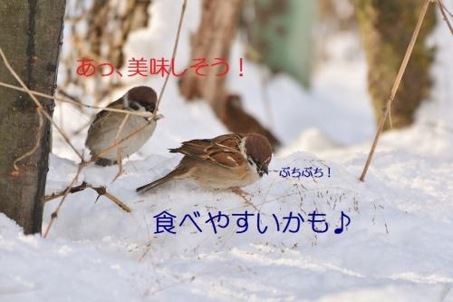 080_20160120193103f41.jpg