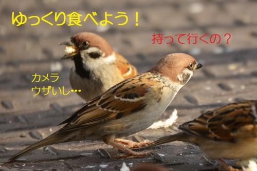 080_2016012321574592e.jpg