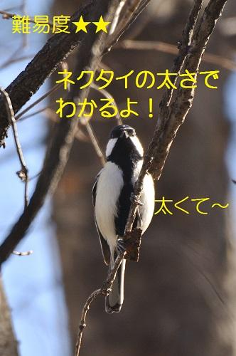 080_20160228011843bfc.jpg