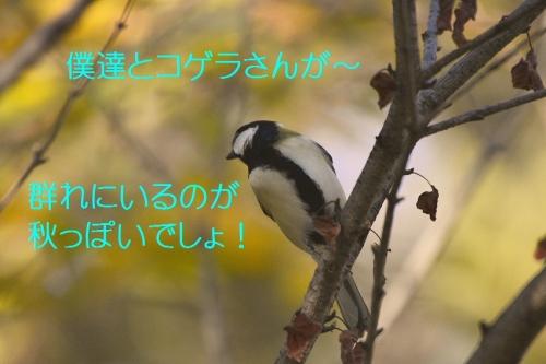 090_20151117175505d1b.jpg