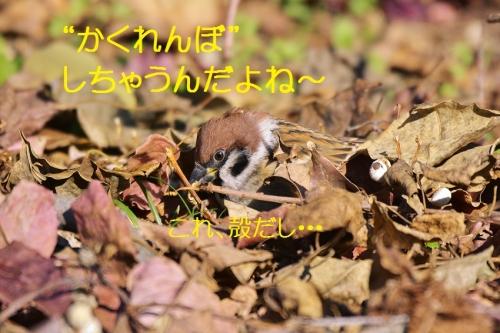 090_20151204190311ed0.jpg
