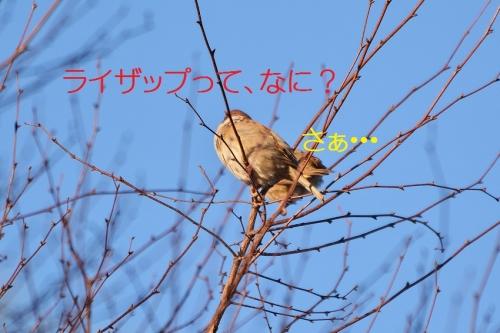 090_20160115205116e09.jpg
