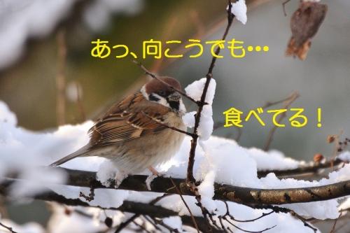 090_2016012521283658f.jpg