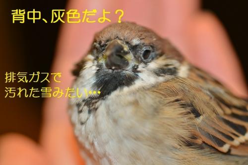090_20160201181927364.jpg