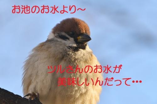 090_20160214130419393.jpg