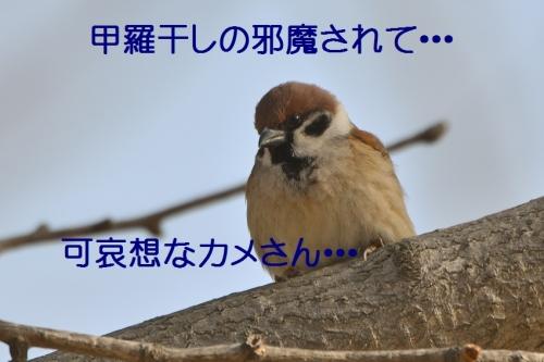 090_20160223214009c9d.jpg