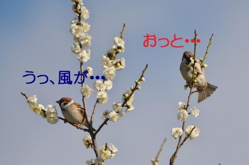 090_201602261846417d1.jpg