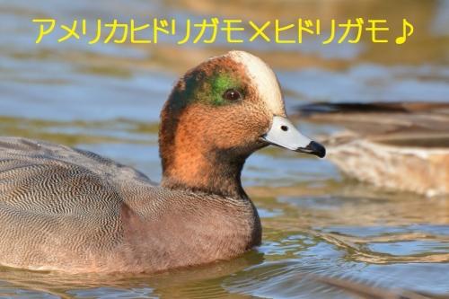 090_201603031921006b4.jpg