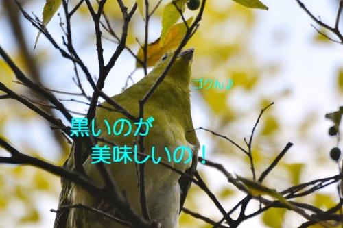100_201511042052295b7.jpg