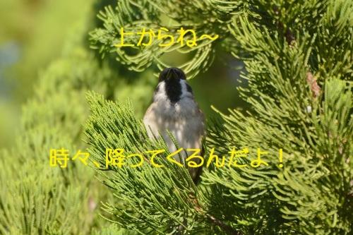 100_20151107224918fa1.jpg