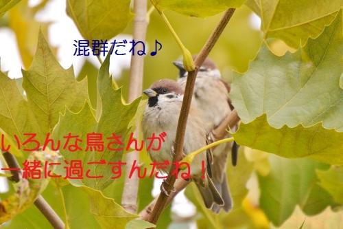 100_2015111717550683a.jpg