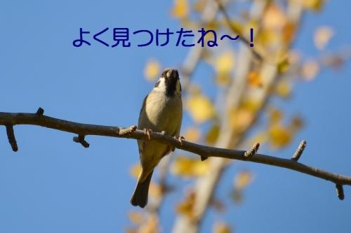 100_20151118174254ea2.jpg