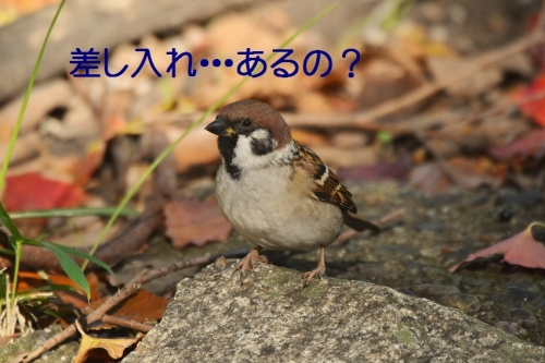 100_20151123220151cd4.jpg