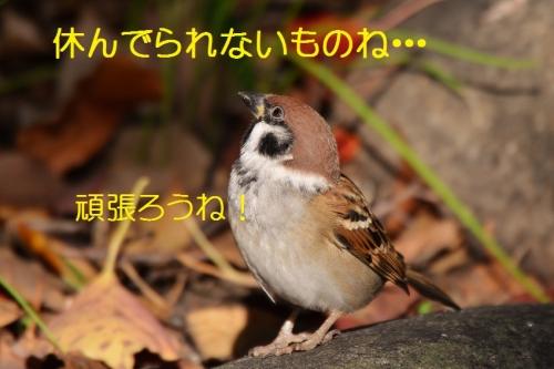 100_2015112421193777a.jpg