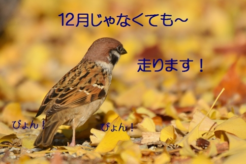 100_20151130213210ed2.jpg