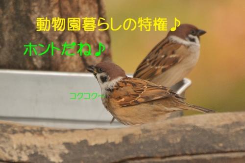 100_201512111804028d6.jpg
