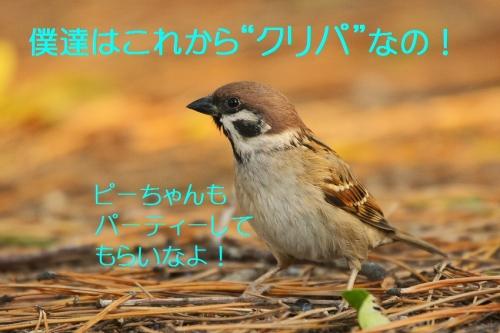 100_2015122421403871e.jpg
