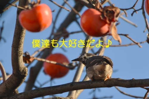 100_20151227213624fdc.jpg