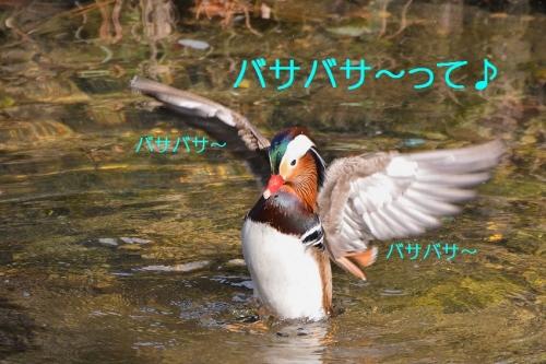 100_20160103213039dad.jpg