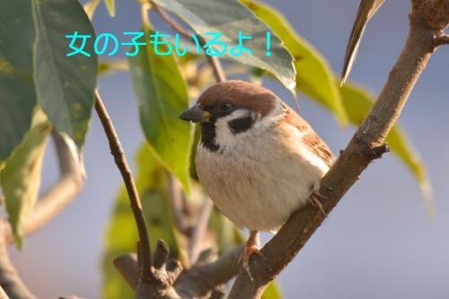 100_20160119171811ef2.jpg
